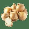Oignons, ail échalotes et herbes